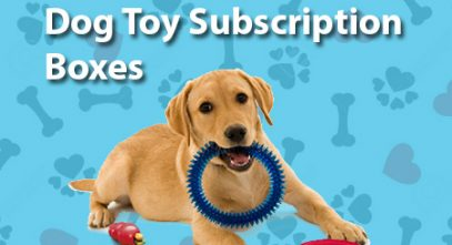 Best Dog Toy Subscription Boxes
