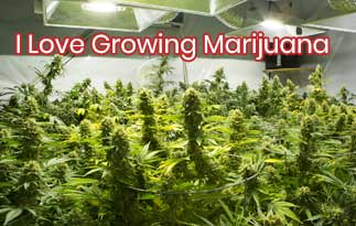 I Love Growing Marijuana Discount Code – The Rich And Quality Cannabis Seeds