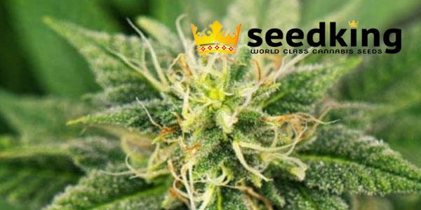 Seedking Promo Code